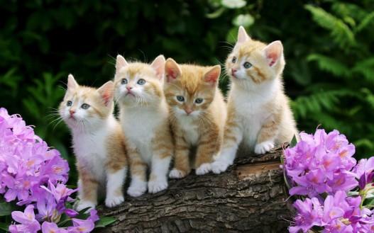 curious_kittens